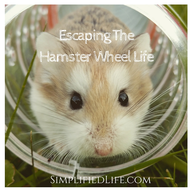 Escaping The Hamster Wheel Life