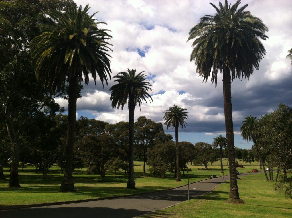 gap-year-palm-trees